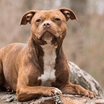 """Listenhunde""? Nie im Leben!"